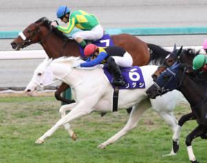 【桜花賞】出走馬の調教後の馬体重