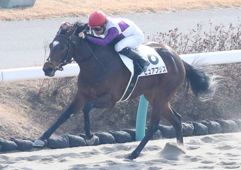 【新馬/中山4R】ロードカナロア産駒 ピュアブリスが逃げ切る!デビューV