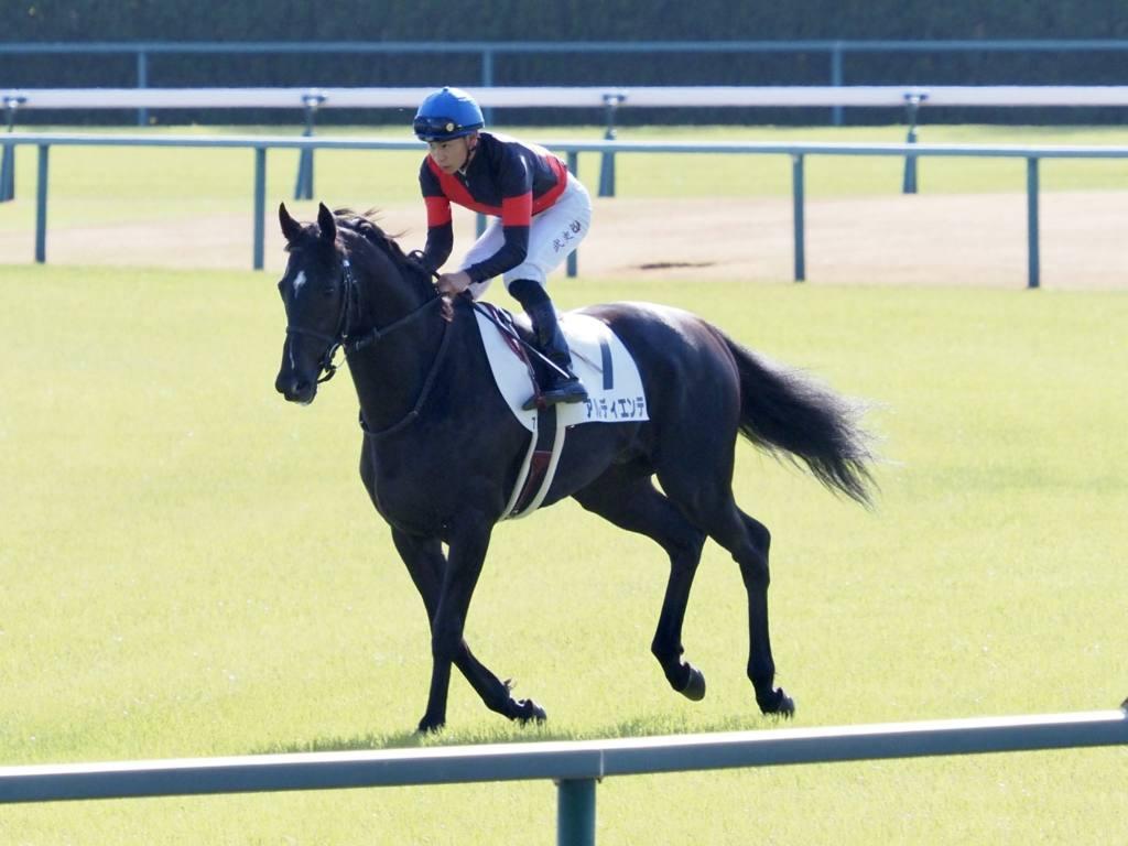 【チャンピオンズC】川田「またこの馬らしい走りが出来るようになれば」レース後ジョッキーコメント