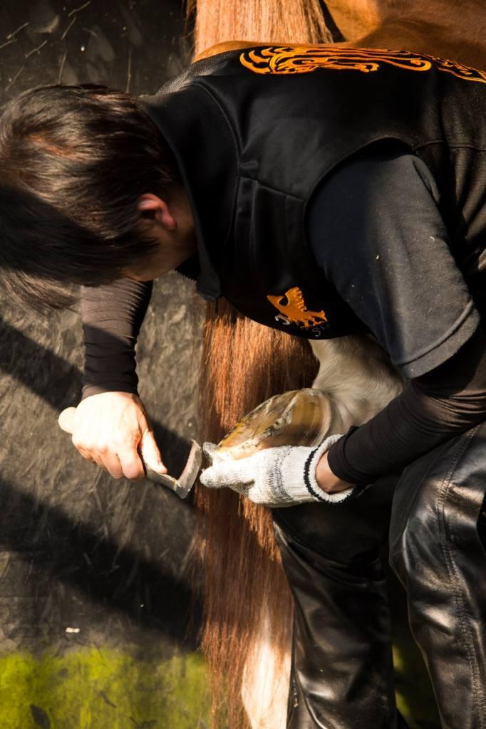 【チャンピオンズC】装蹄師から見たチュウワウィザード 西内荘「装蹄の感触は上々」