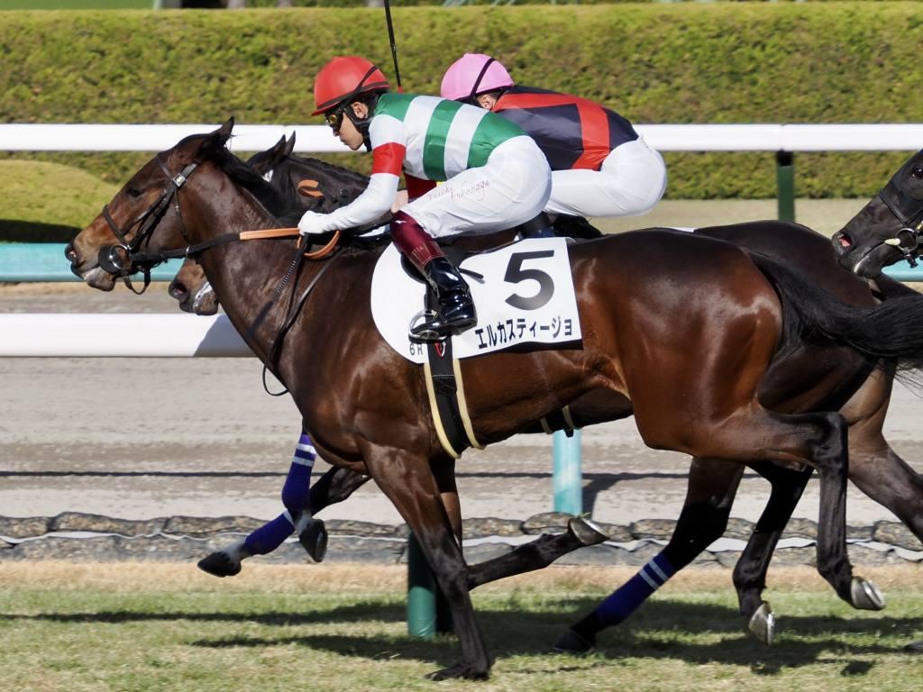 【新馬/阪神6R】ロードカナロア産駒 エルカスティージョが完勝