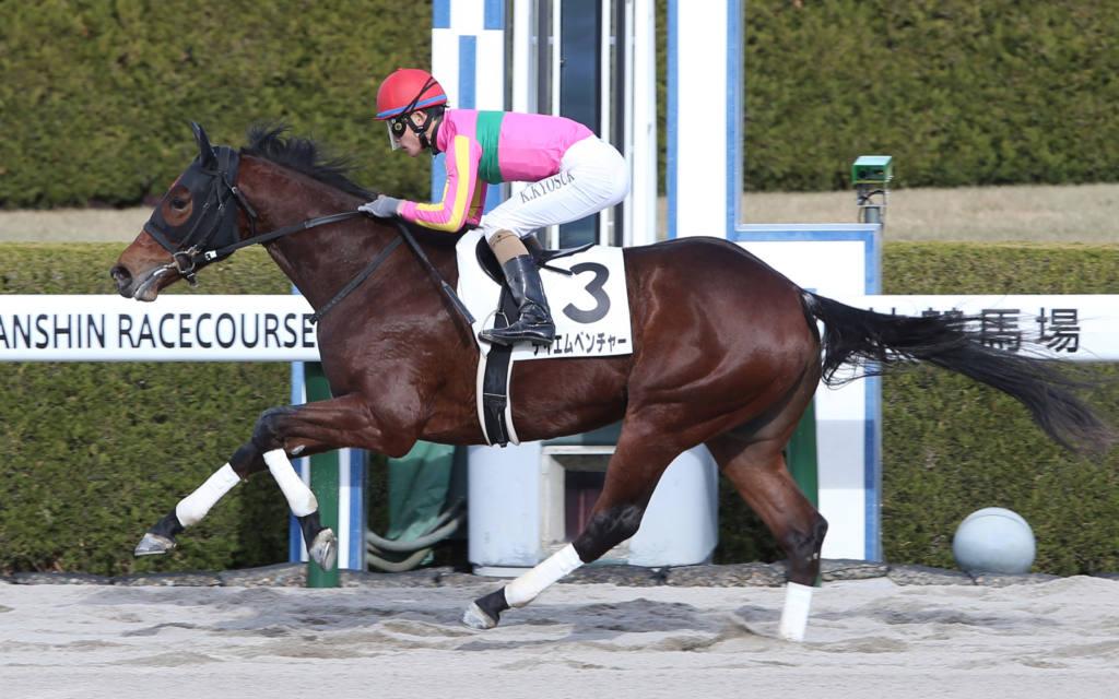 【新馬/阪神5R】テイエムベンチャーが断然の人気に応える