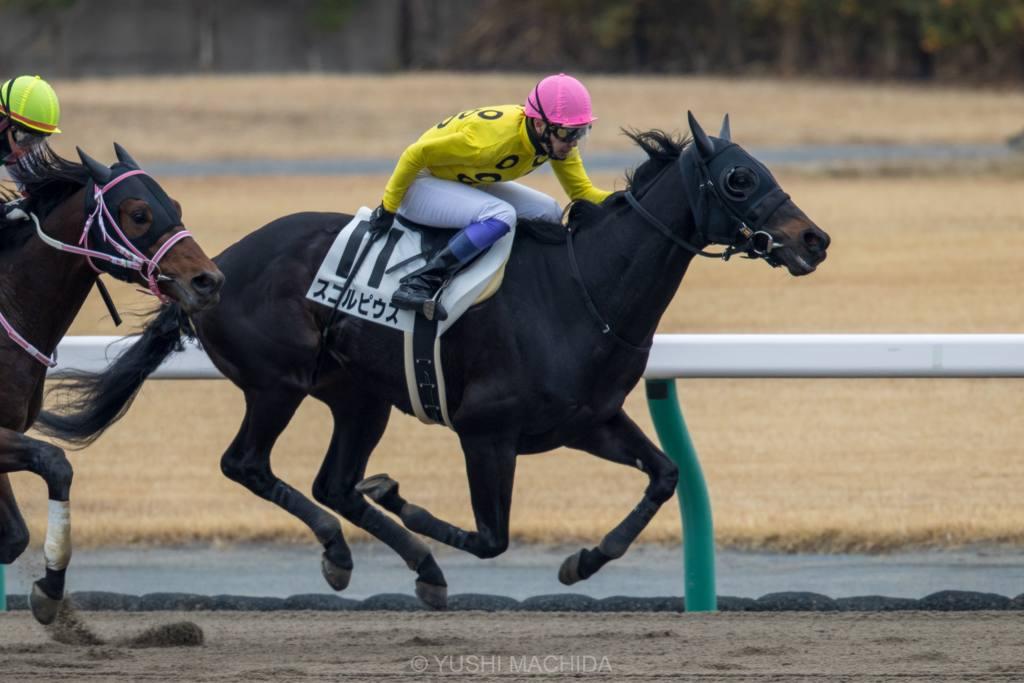 【中京2R】武豊騎手が2021年初勝利!ジャスパーゴールドでV