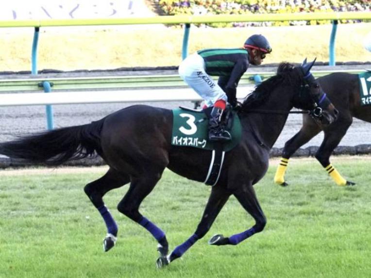 【京都金杯】出走馬の調教後の馬体重