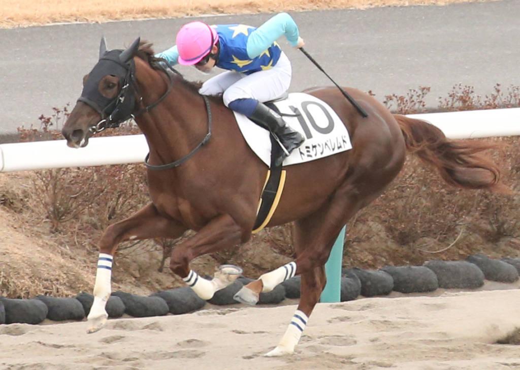 【新馬/中山6R】エスケンデレヤ産駒 トミケンベレムドがデビューV