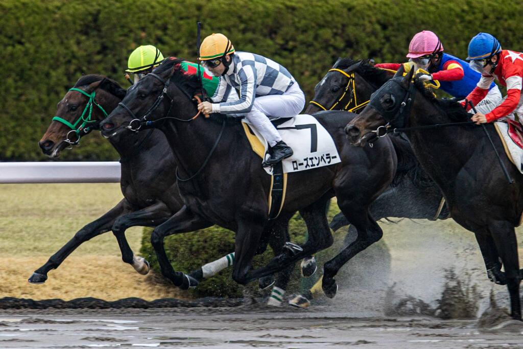 【阪神6R】ハマの番長所有!マリーナが3馬身差完勝