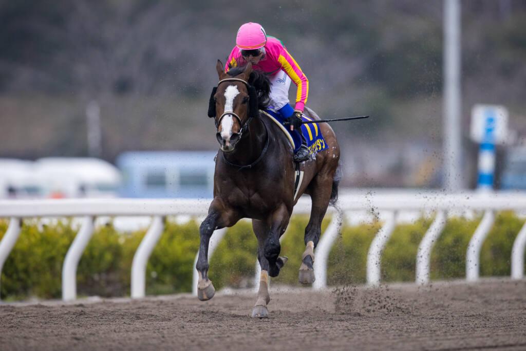 【黒船賞】テイエムサウスダンが8馬身差の圧勝