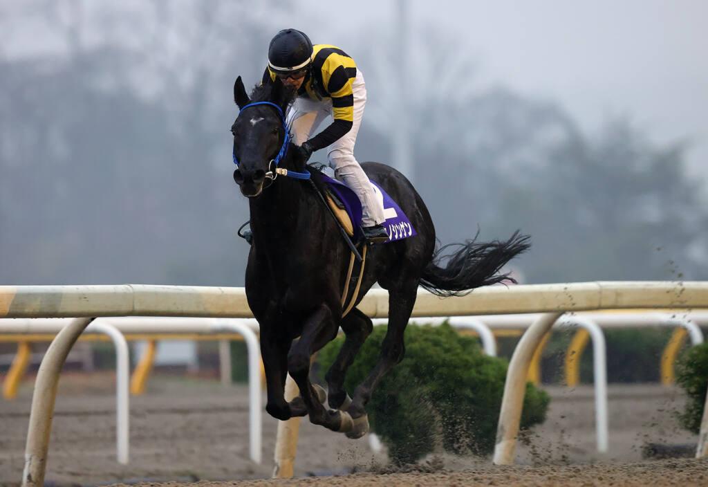 【水沢・スプリングカップ】リュウノシンゲンが2着馬に9馬身差を付ける圧勝!