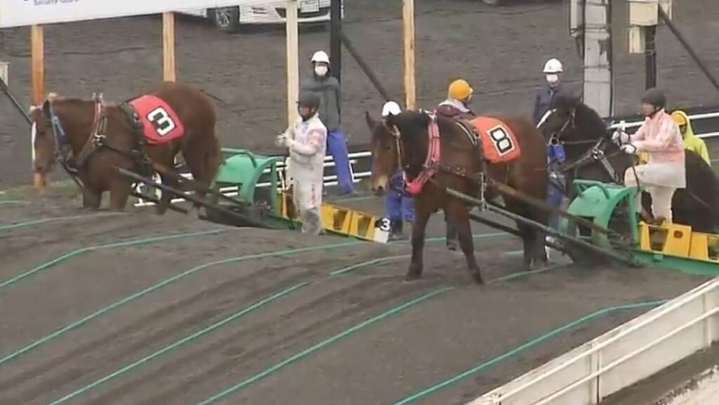 【かきつばた記念】JRA出走予定馬