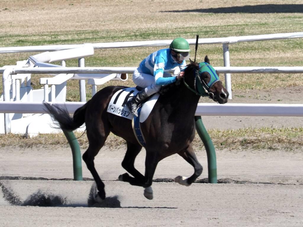 【新潟9R】女性騎手競演、3レース目は古川9着、永島11着、菜七子12着