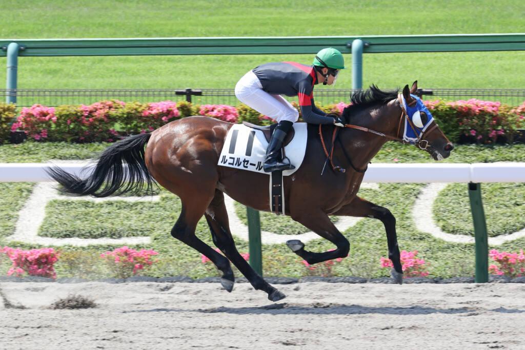 【東京1R】断然人気 ルコルセールが8馬身差圧勝