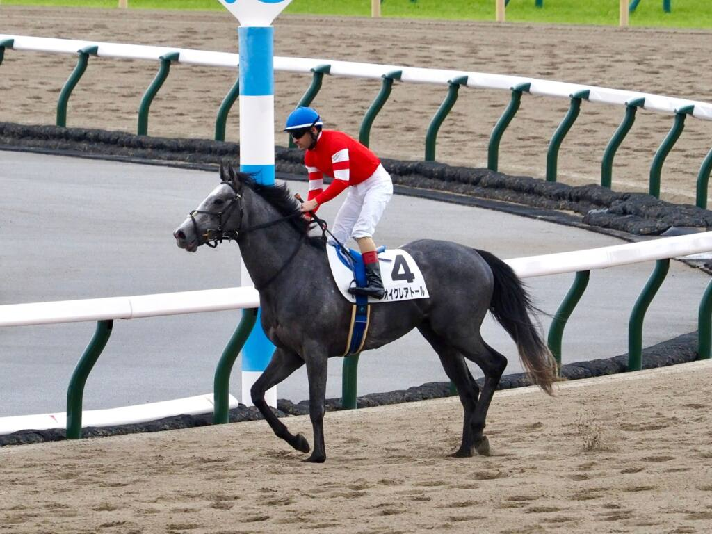 【東京8R】アオイクレアトールが人気に応えて3勝目