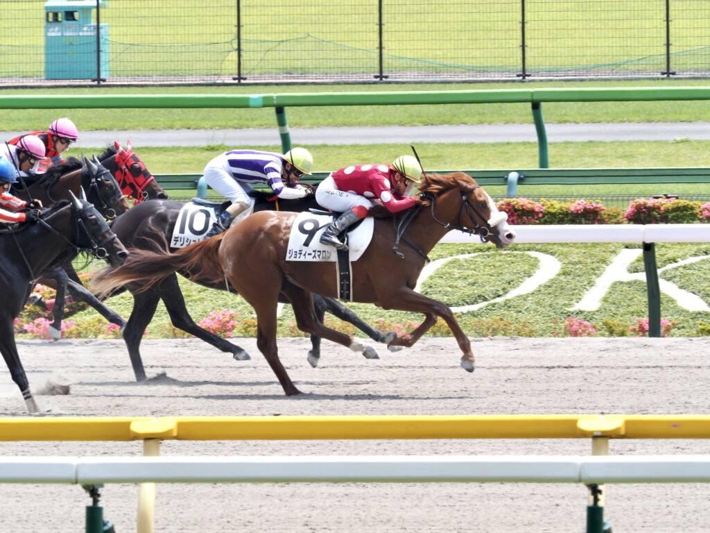 【東京4R】断然人気のレッドロワが初勝利