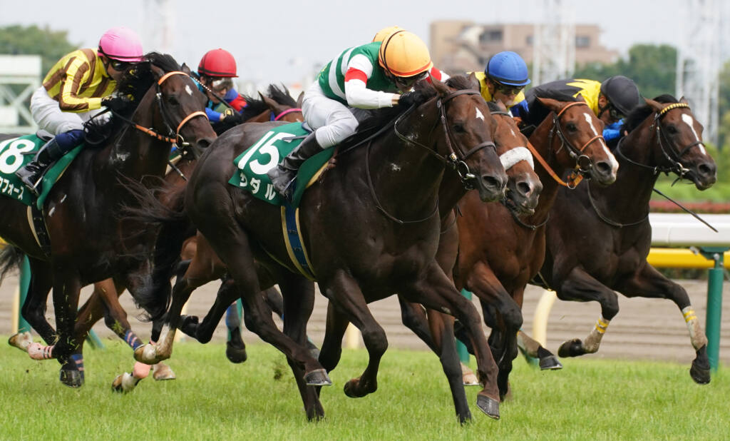 【新潟記念登録馬】ザダルなど18頭