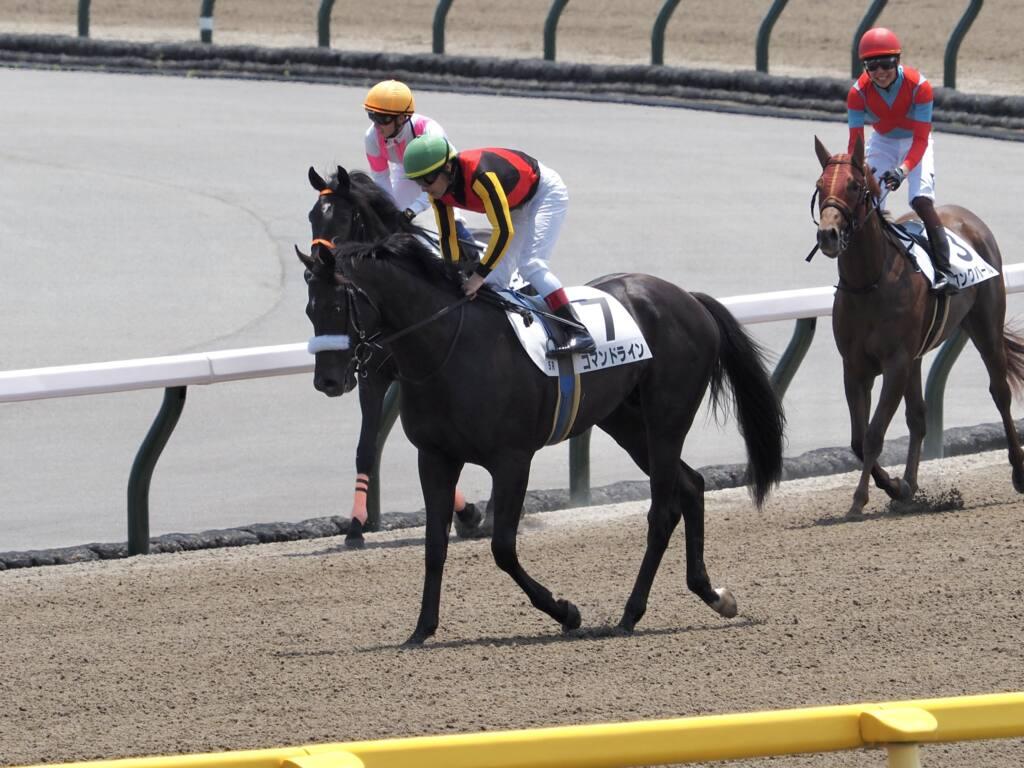 【新馬/東京5R】東の一番星は良血コマンドライン