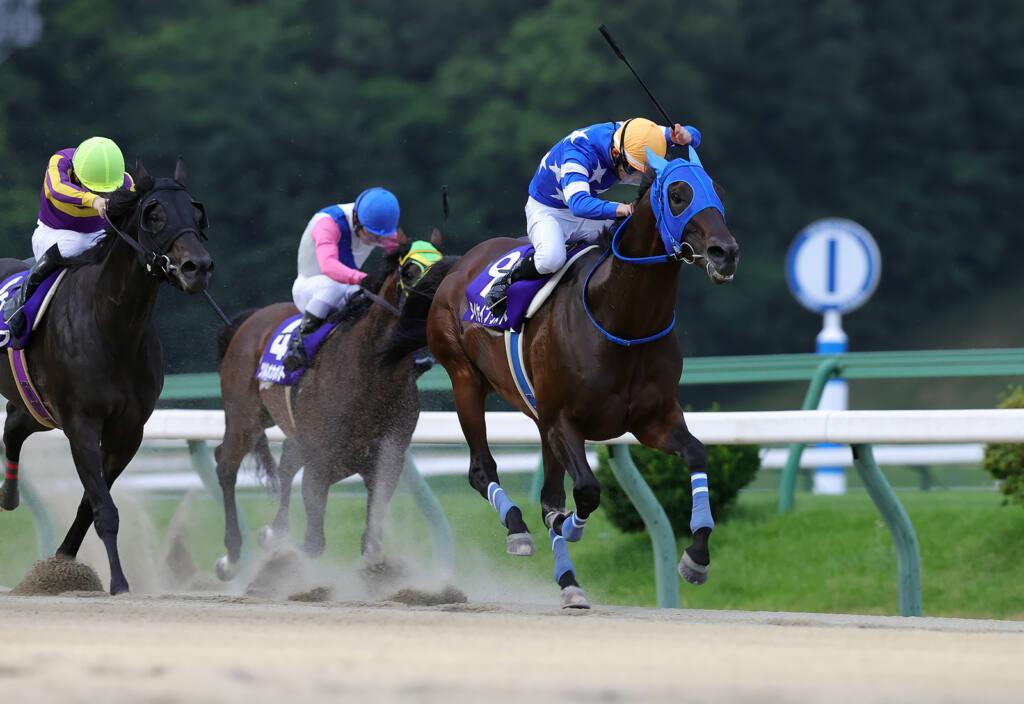 【スパーキングレディーC】JRA出走予定馬