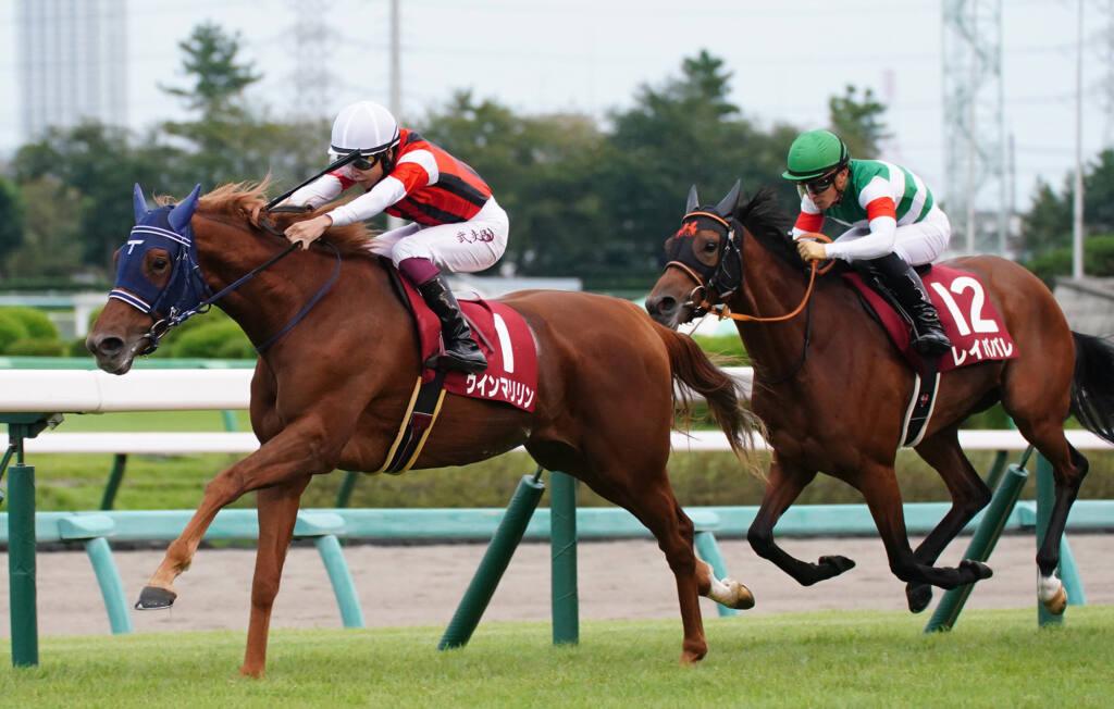 【新馬/中京4R】シニスターミニスター産駒 ドライスタウトがデビューV