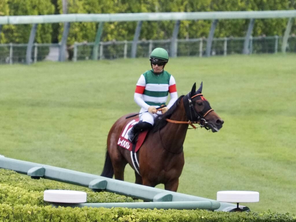 【オールカマー】横山武「馬に救われた」ウインマリリンが快勝