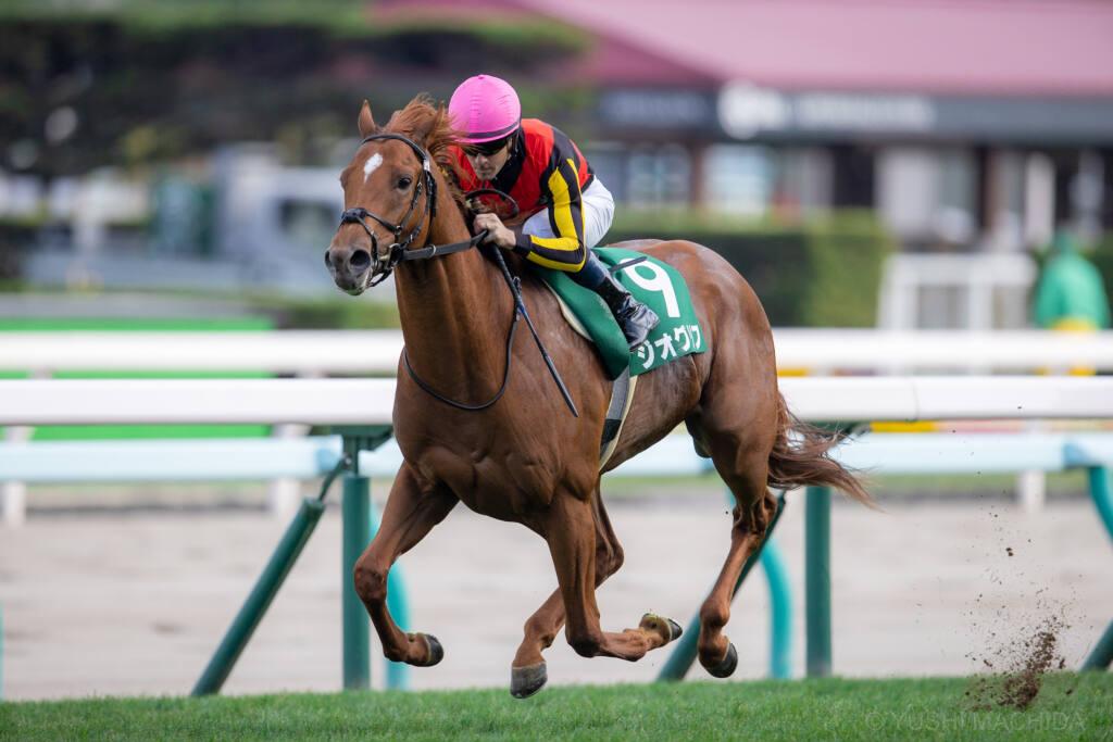 【札幌2歳S】ジオグリフが4馬身差で楽勝!