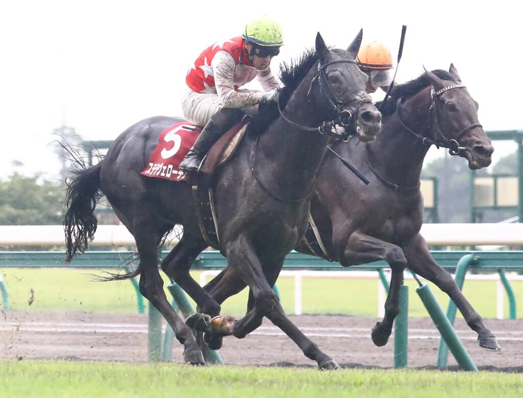 【神戸新聞杯】ステラヴェローチェが突き抜ける!シャフリヤールは4着