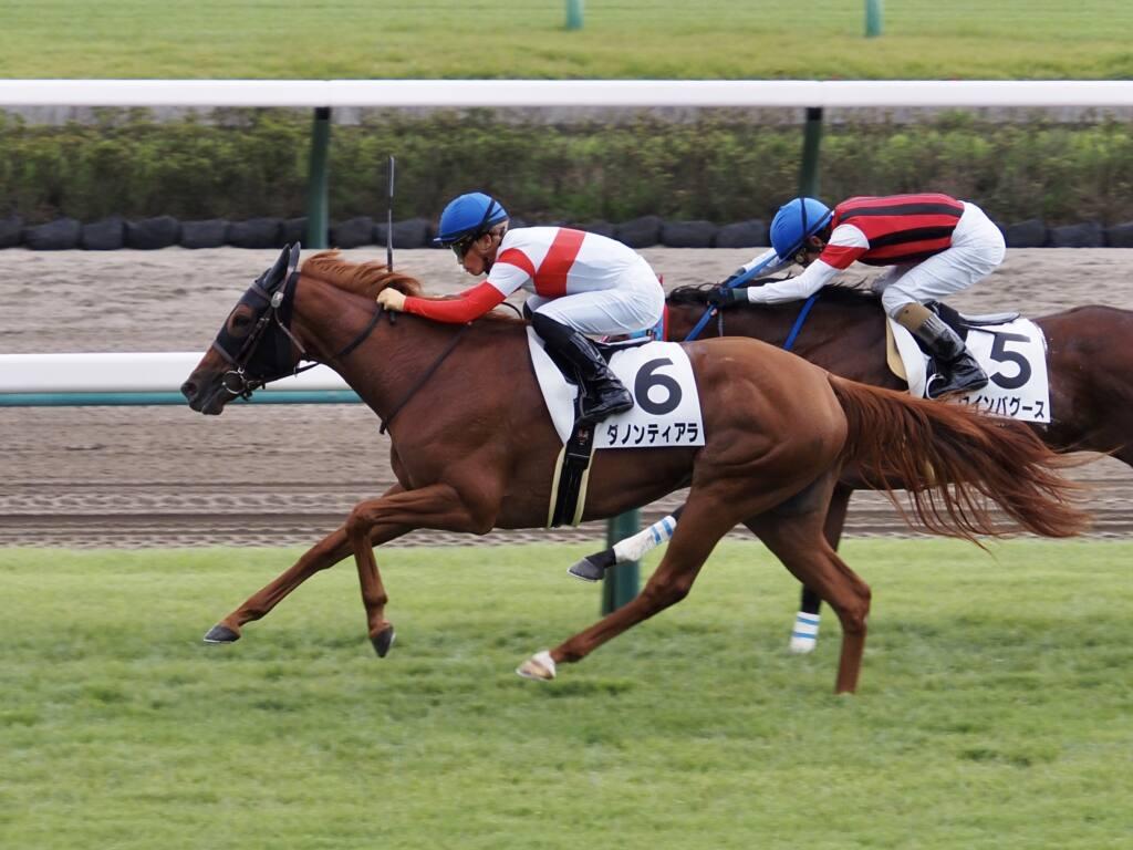 【サフラン賞】シルバーステート産駒 ウォーターナビレラがデビュー2連勝